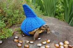 MossyTortoise is an Etsy shop offering custom crocheted cozies for your pet tortoise. Katie Bradley is behind the concept, which began with an 'accidental hobby' of rescuing tortoises Sulcata Tortoise, Tortoise Care, Baby Tortoise, Tortoise House, Tortoise Habitat, Tortoise Turtle, Turtle Sweaters, Russian Tortoise, Pet Turtle