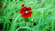 Events | First World War Centenary, Calendar etc