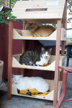50 Ideas cats house outdoor diy kitty for 2019 Outdoor Cat Enclosure, Cat House Diy, Diy Cat Tree, Cat Towers, Cat Playground, Cat Room, Outdoor Cats, Pet Furniture, Diy Stuffed Animals