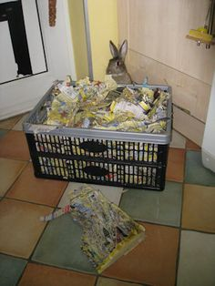 Yellow Pages: The House Rabbits' Answer to Carpet Chewing