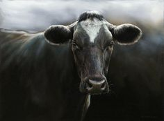 Sold | Eefje the Cow, oil/canvas 24 x 32 inch (60x 80 cm) © 2009 Klimas