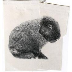 Ruth van Beek My bunnie