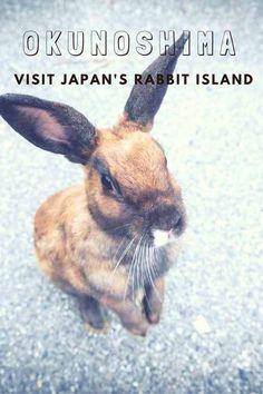 Visit Okunoshima, Japan's Rabbit Island - Visit Rabbit Island, meet the bunnies and learn about the war history of Okunoshima! #Okunoshima #Japan #kawaii