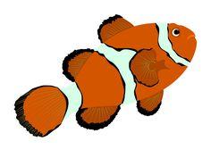 Clownfish illustration using Inkscape - Ocellaris Anemonefish or Amphiprion ocellaris