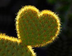 ❤ cactos heart
