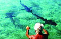 play with the sharks at Karimunjawa Island, Central Java - Indonesia