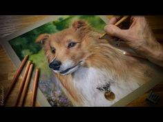 Speed drawing a dog in pastels - 'Robi' the Sheltie - YouTube
