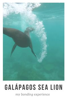 Galapagos Islands Travel, Photography, Wildlfie / Animals and Sea Lions! What more could you want! Galapagos Islands Tips, bucket list and things to do! Ecuador Travel top places to visit! Sea Line playing, diving, swimming with sea lions  ☆☆#Inspiredbymaps ☆☆