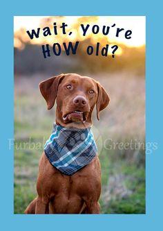 Dog Greeting Cards FurBabyGreetings Birthday Card FurBaby