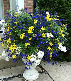 Container Garden Designs Container Flowers, Flower Planters, Container Plants, Garden Planters, Container Gardening, Flower Pots, Outdoor Plants, Outdoor Gardens, Garden Bugs