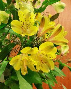 Random  Flowers