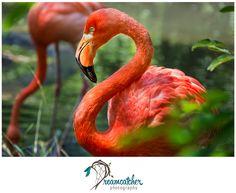 Pittsburgh Zoo - Flamingo www.nicdreamcatcher.com ©Nicole Iagnemma