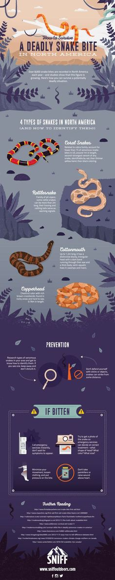 How to Prevent and Treat a Snakebite: