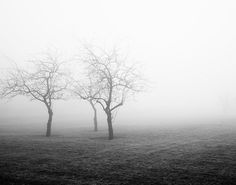 Orchard Fog, Foggy Landscape Photography - Black and white landscape photograph of three apple trees in a field of fog.
