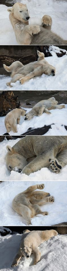 21 Cool Polar Bear Facts                                                                                                                                                      More