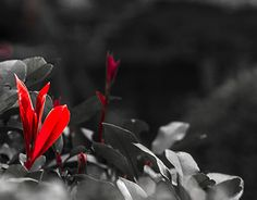 """Check out new work on my @Behance portfolio: """"Plant Life"""" http://be.net/gallery/49984477/Plant-Life"""