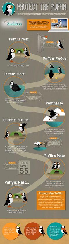 Sea Birds, Love Birds, Beautiful Birds, Bird Kite, Endocannabinoid System, Audubon Society, Thinking Day, Wildlife Conservation, Endangered Species
