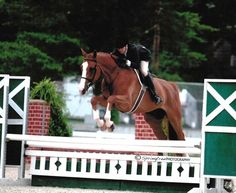 Rumor Has It - Hanoverian - Hunter