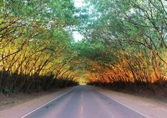 Green Tunnel Santa Rita - Paraguay [1280x906]