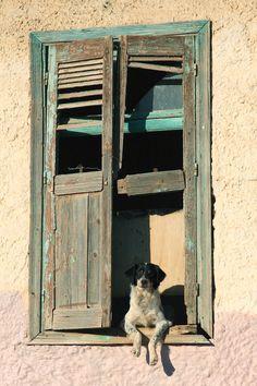 dog story II through the eyes of negative