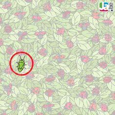 zoekspel_lieveheersbeestje_oplossing-1024x1024.jpg (1024×1024)