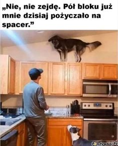 Laughter is the Best Medicine (Do Not Feed Trolls) - Energetic Synthesis Forum - Energetic Synthesis Funny Dogs, Funny Animals, Funny Memes, Funny Sarcasm, 9gag Funny, Funny Captions, Dog Memes, Funny Sayings, Memes Humor