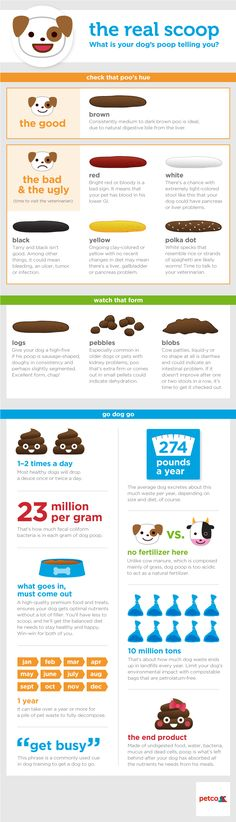 What is Your Dog's Poop Telling You