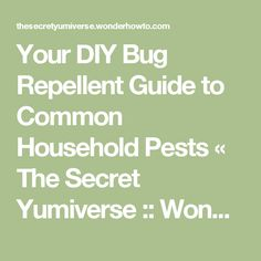 Your DIY Bug Repellent Guide to Common Household Pests « The Secret Yumiverse :: WonderHowTo