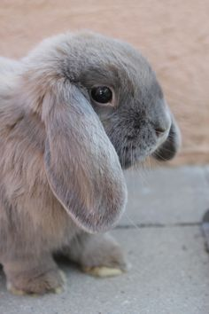 Bunny is curious about something - September 3, 2012