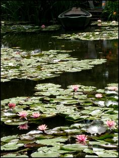 Water Plants, Water Garden, Giverny France, Lake Pictures, Painting Flowers, Green Garden, Large Photos, Color Shapes, Water Lilies