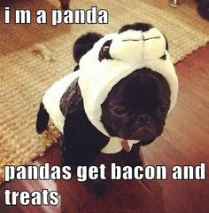 I Has A Hotdog - Page 4 - Loldogs n Cute Puppies - funny dog pictures - Cheezburger