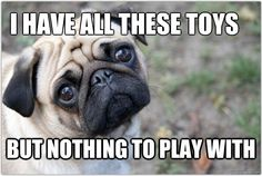 First world dog problems: Toys