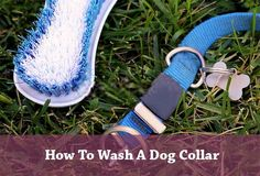Do you know How To Wash A Dog Collar correctly? There may have germs in the collar and can attack your puppy if you don't know the proper way of cleaning
