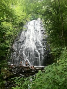 Crabtree Falls, the most majestic waterfall I have ever visited.  Find this treasure for yourself in Black Mountain, NC.  You can camp at the campground and hike to the falls.  The temperature is much cooler at the falls so a great hike in the heat of summer