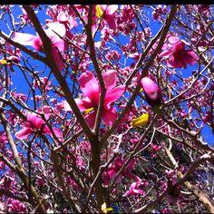 Beautiful tree in capitol park,