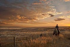 Sunset on the Prairie by Robert Dawson It can be a lonely job but a necessary one when you a ranch Checking the fenceline for any breaks can take you all day to do However the sunsets and wide open country and give you peace Cowboy Horse, Cowboy Art, Horse Riding, Western Style, Western Art, Ranch Riding, Visualisation, Ranch Life, Equine Photography