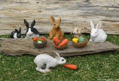 Mini rabbits eating lunch in the enchanted fairy garden.