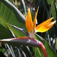 2036 Meilleures Images Du Tableau Fleurs Oiseaux Papillons Jardins