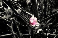 Spring is coming. By Ellen Mueller