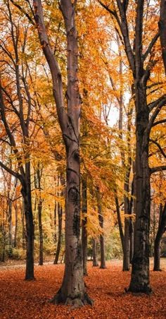 """hans-christie: """" The best time of the year 🍂 Munich, Germany. Magic Hour, Autumn Aesthetic, Fall Weather, Time Of The Year, Top Photo, Landscape Paintings, Find Image, Landscape Photography, Waterfall"""