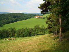 Das ideale Wandergebiet für gemütliche aber auch fortgeschrittene Wandertouren. #derwiesenhof #wohlfühlhotelwiesenhof #wanderurlaub #naturpur Golf Courses, Country Roads, Hiking