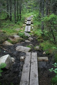 This reminds me of the miles of board walks on the west coast trail - where Ken's mom fell face down in the mud (so funny, even at the time!)