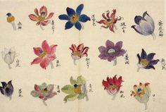 Untei Sekine, Anemone flowers from the Edo period