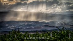 Photograph (part of the on-going Sunday Wine Shot series) Over Bulgarian Vineyards to Rain on Distant Hills