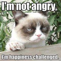 grumpy cat memes - lololol