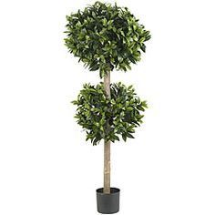 @Overstock - Enhance the beauty of any room with this silk double ball sweet baby tree. This tree is 57 inches tall with more than 1600 bay leaves and is completely maintenance free. http://www.overstock.com/Home-Garden/Sweet-Bay-Double-Ball-Silk-Tree/5835020/product.html?CID=214117 $129.99
