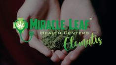 Medical Cannabis Card is available at Miracle Leaf West Palm Beach on Clematis Street. Patients must first qualify with a health condition to be prescribed in Florida. Schedule a visit with Miracle Leaf and see one of their this week! Perfect Image, Perfect Photo, Love Photos, Cool Pictures, Clematis Street, Health Center, West Palm Beach