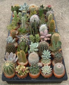This picture makes me wonder if I want to include succulents. Maybe a few? That's a lot of variation though.