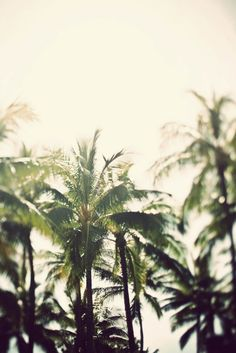 Free your Wild :: Escape to a Beach Paradise :: Tropical Island Adventures :: Soak in the Sun :: Palms + Ocean Air :: See more Untamed Island inspiration Paraiso Natural, Playa Beach, Palmiers, Le Far West, Jolie Photo, Mellow Yellow, Yellow Sky, Summer Of Love, Hello Summer