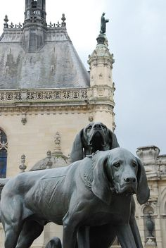 Hounds, Chantilly, Picardy, France  | www.gooverseas.com | Intern, Teach, Volunteer, Study Abroad! | Make your dreams a reality.